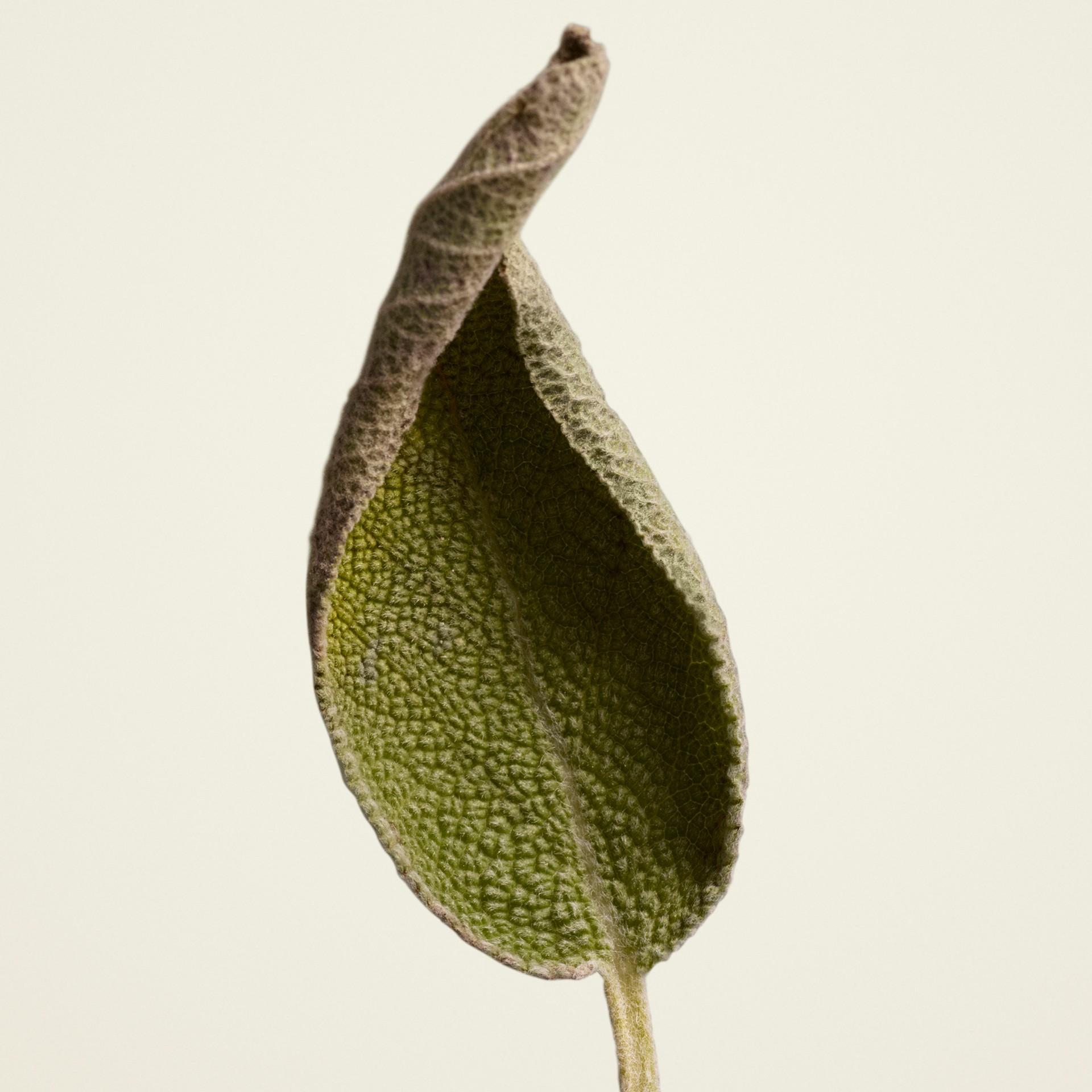 Burberry Signatures Clary Sage Eau de Parfum 100ml | Burberry - gallery image 2