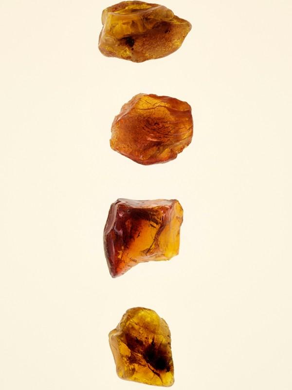 Burberry Signatures Amber Heath Eau de Parfum 100ml | Burberry - cell image 2