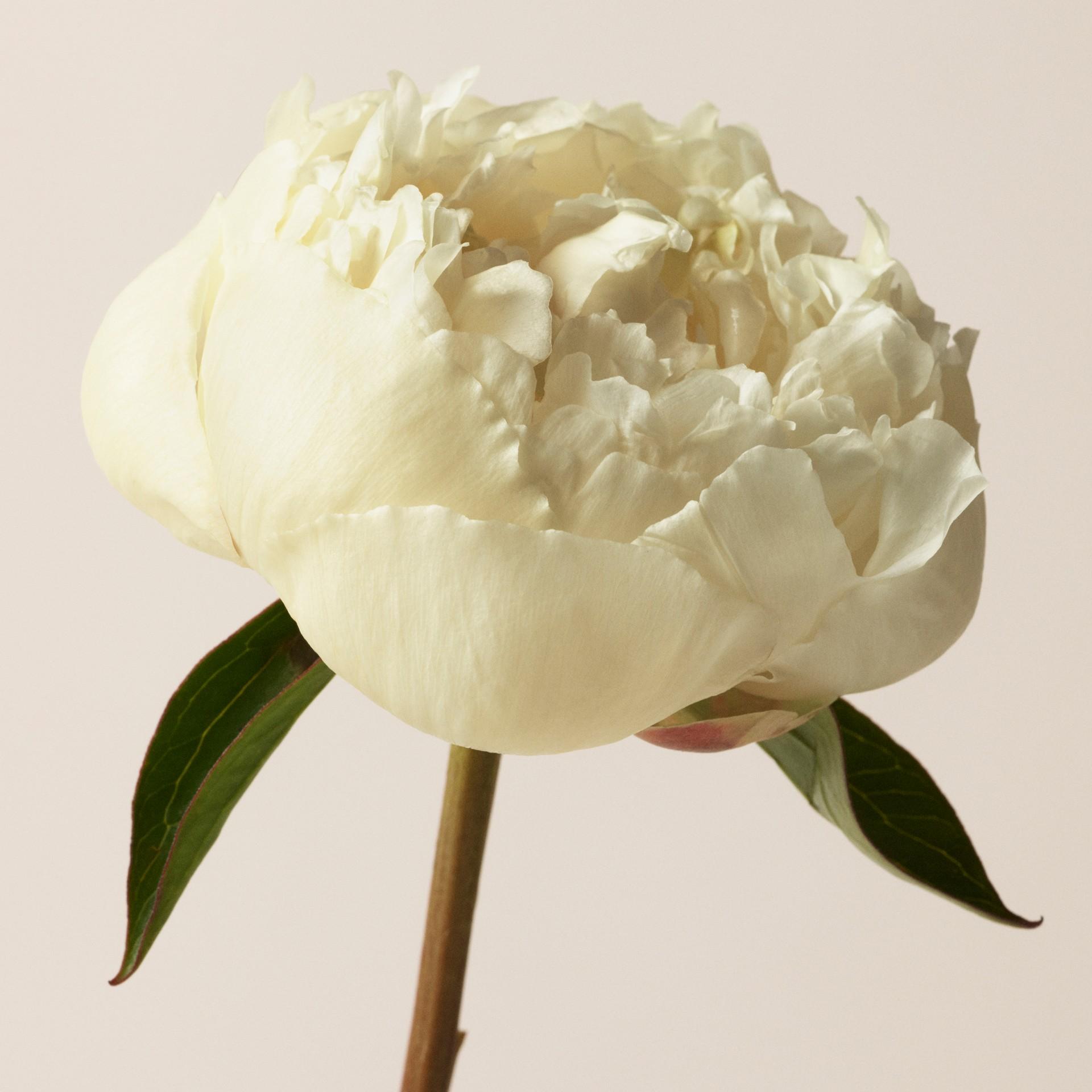 Her London Dream Eau de Parfum 50 ml (50ml) - Mulheres | Burberry - galeria de imagens 1