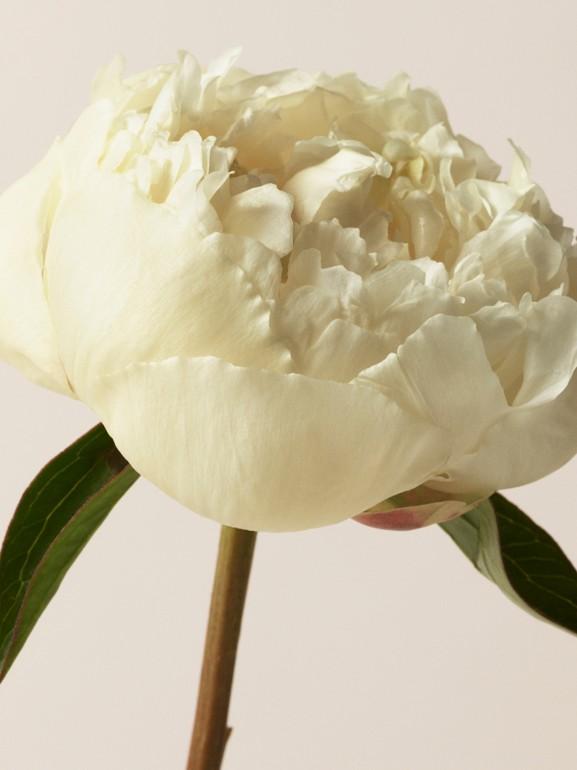 Her London Dream Eau de Parfum 50 ml (50ml) - Mulheres | Burberry - cell image 1