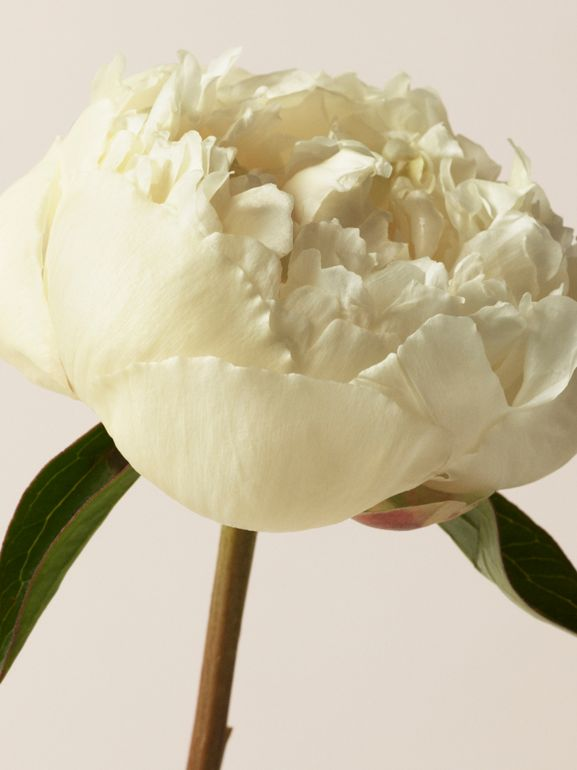 Her London Dream Eau de Parfum 30ml - Women | Burberry - cell image 1