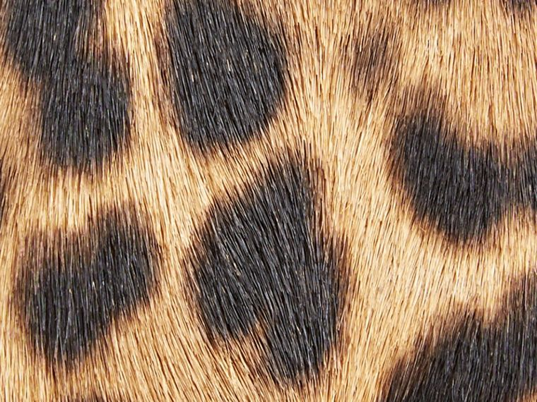 Camel The Medium Banner in Animal Print Calfskin - cell image 1