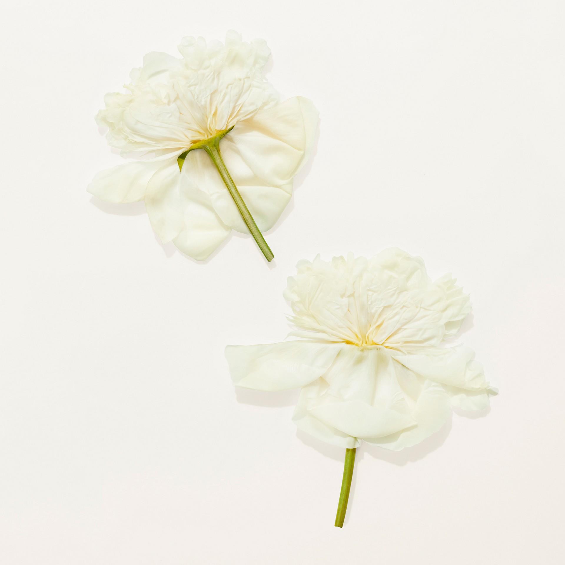 Her Blossom Eau de Toilette 100ml - Women | Burberry Singapore - gallery image 7