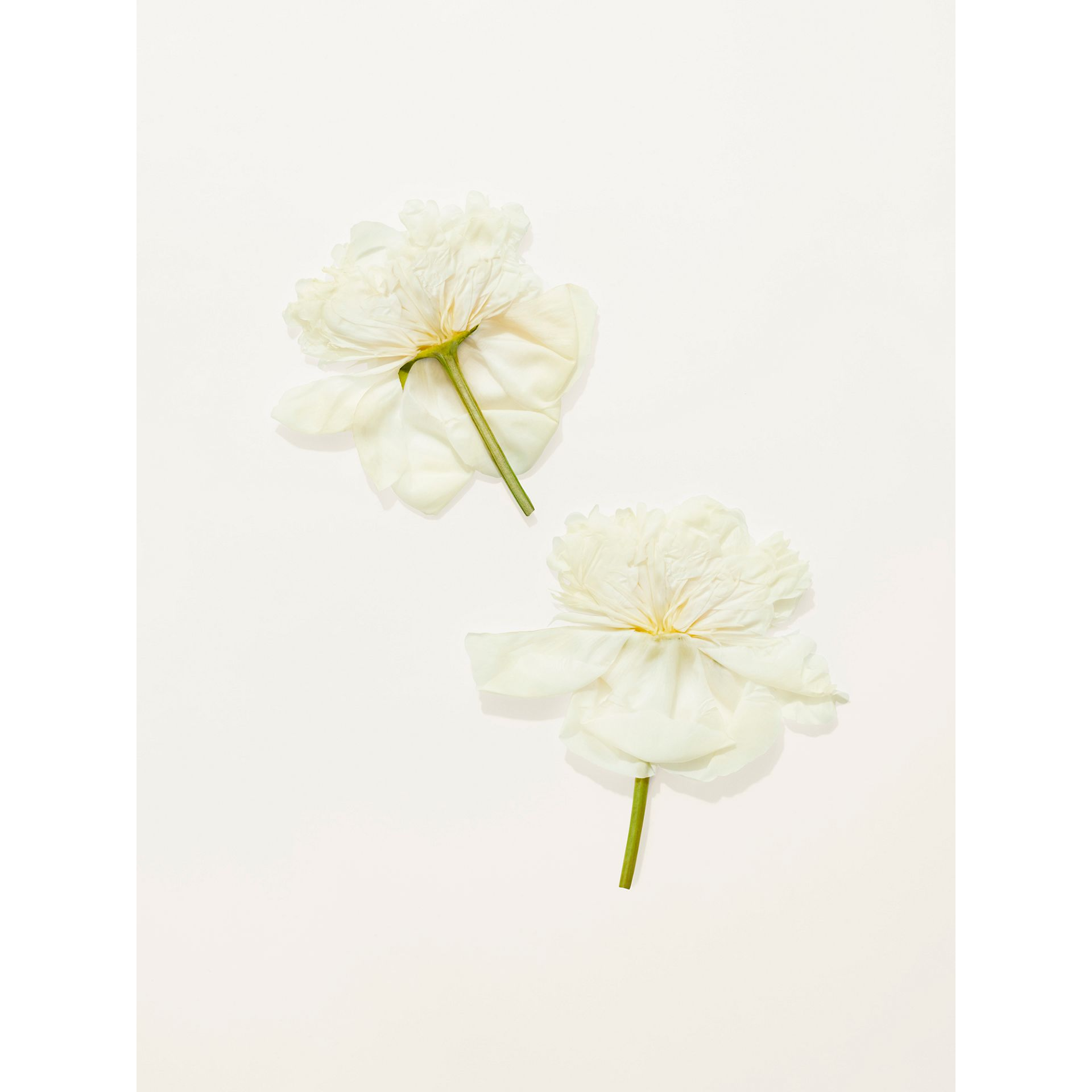 Her Blossom Eau de Toilette 30ml - Women | Burberry United States - gallery image 5