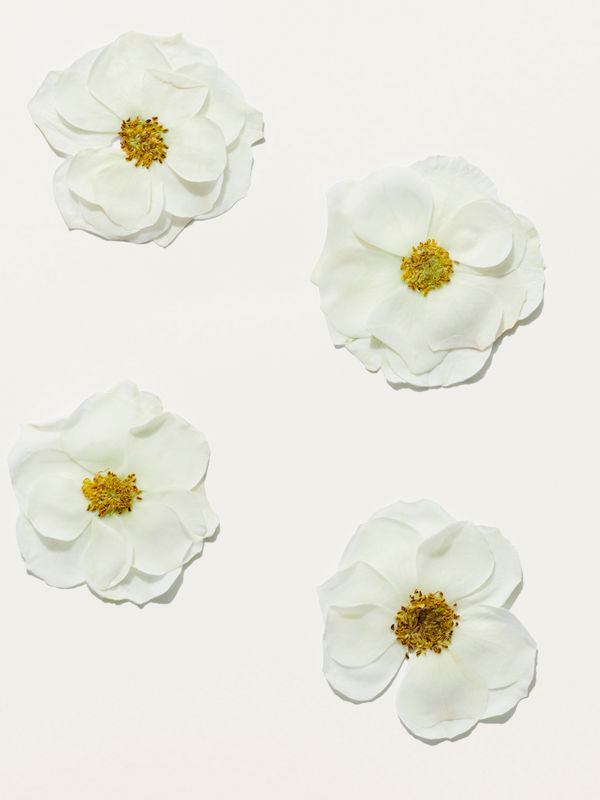 Her Blossom Eau de Toilette 30ml - Women | Burberry United States - cell image 2