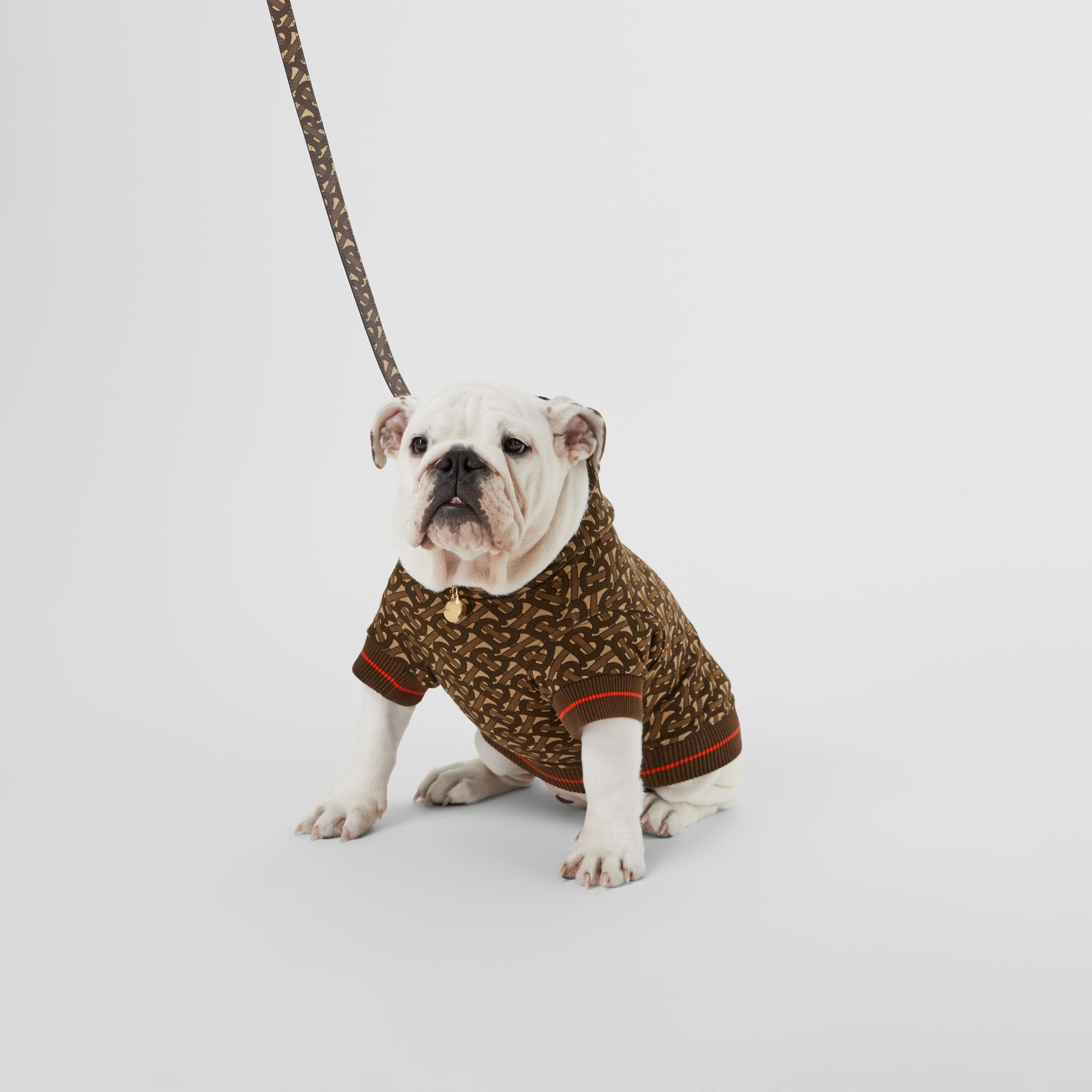 Monogram Print E-canvas Dog Leash in Bridle Brown | Burberry - gallery image 2