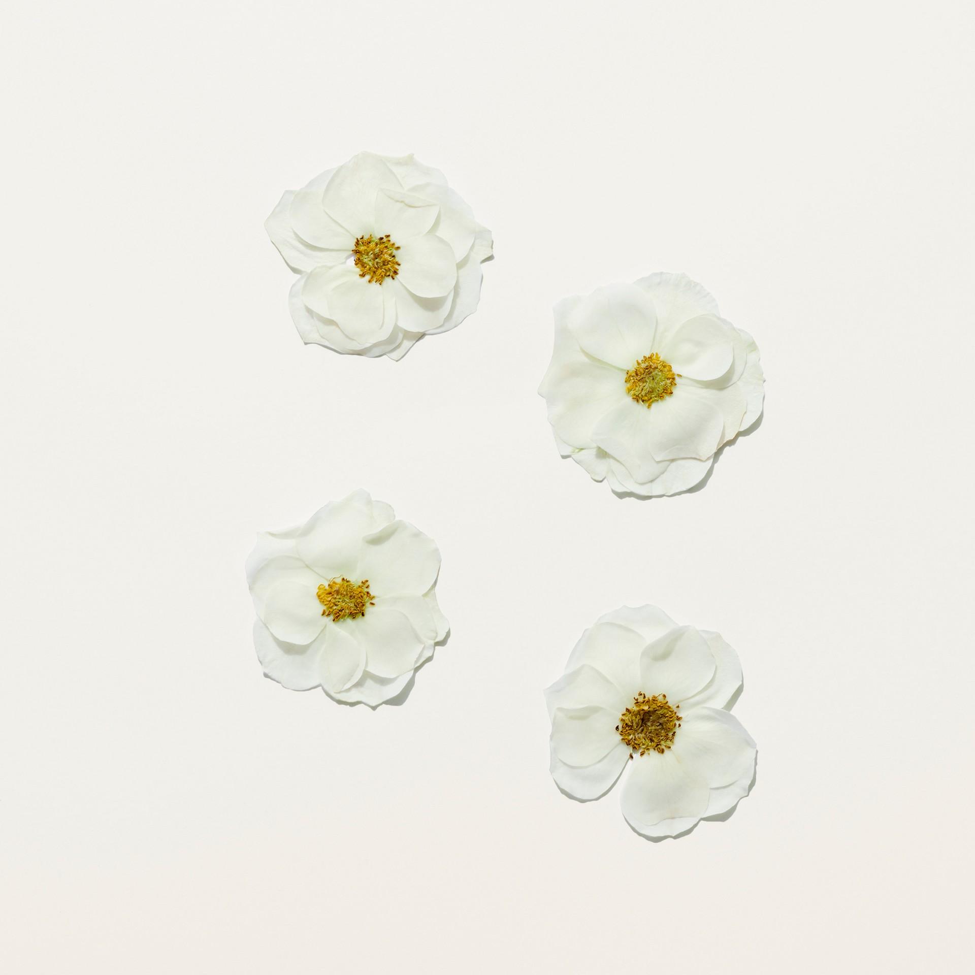 Her Blossom Eau de Toilette 100ml - Women | Burberry Singapore - gallery image 2