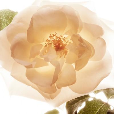 Burberry - Eau de parfum MyBurberry 30ml - 2