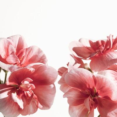 Burberry - Eau de Parfum MyBlush 90ml - 6